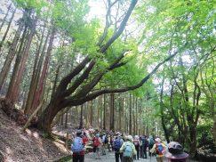 2016-5-15奈良・春日山 165