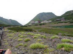 乗鞍岳2016-7-30 249