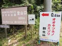 8-11キツネノカミソリ・夏焼山 013