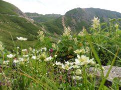 乗鞍岳2016-7-30 275